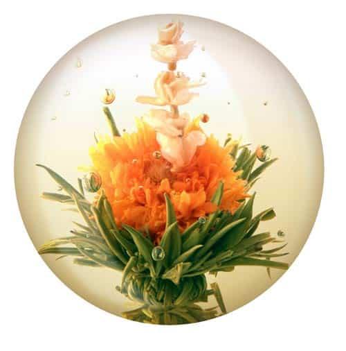Tea Flower